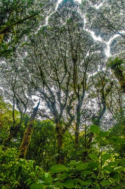 Natural – rainforest tree canopy and low greenery
