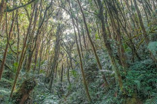 Natural – moss covered trees above verdant jungle floor