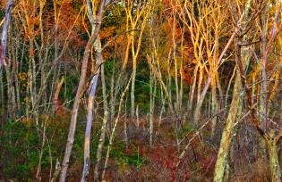 Natural – sunlight illuminates bare treetops above colorful brush