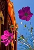 Conceptual, purple flowers and brick facade below half moon sky