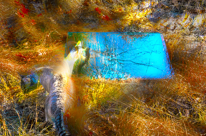 Fantasy – cat in a field with tall grass and mirror