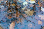 Natural – pool of blue water reflects bare trees and fallen leaves