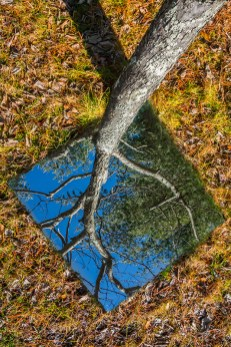 Fantasy – mirror at the base of a tree reflects its 'roots' against the sky