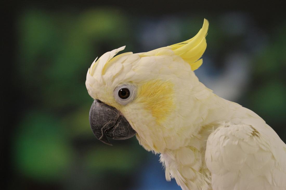 phoenix landing helping parrots