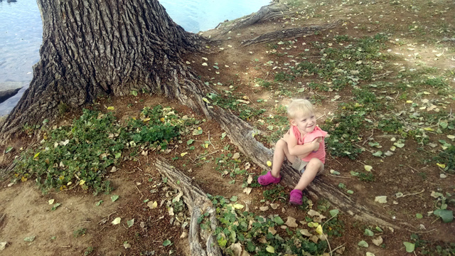tree-scottsdale-roots-photo