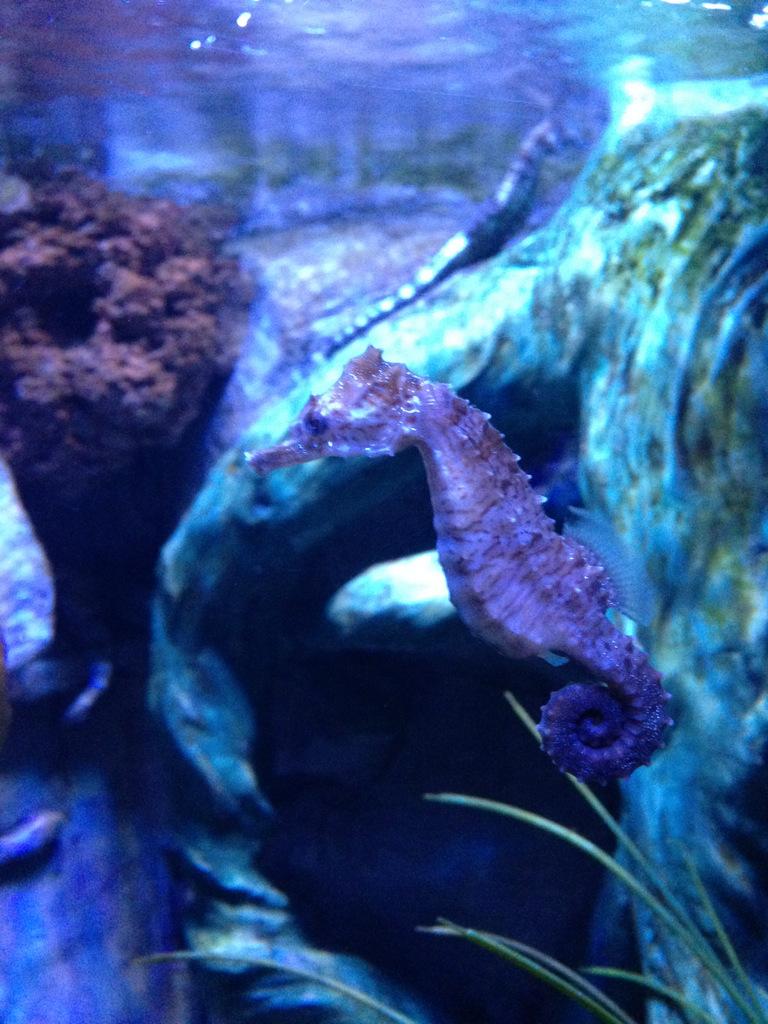 sea-life-arizona-aquarium-photo-IMG_0874