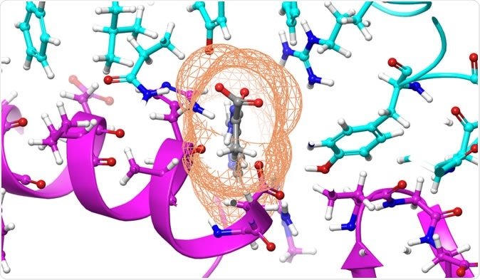 The compound, shown in gray, was calculated to bind to the SARS-CoV-2 spike protein, shown in cyan, to prevent it from docking to the Human Angiotensin-Converting Enzyme 2, or ACE2, receptor, shown in purple. Credit: Micholas Smith/Oak Ridge National Laboratory, U.S. Dept. of Energy