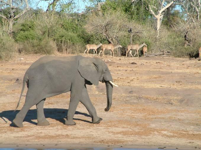 2 augustus 2006 Chobe NP