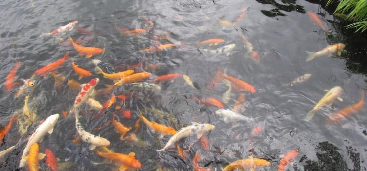 12 augustus 2010 Kurashiki – Kyoto