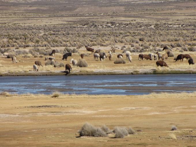 26 juli 2011 La Paz – Uyuni (3670m)