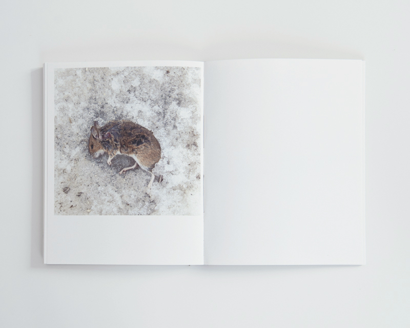 © Iacopo Pasqui e Luca Marianaccio, hard cover, edition of 50 (signed), 2014
