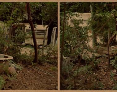 Julie Gautier Downes garden photography vintage online phosmag magazine
