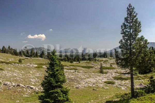 Le mont Aiguille depuis la Plaine du Roi
