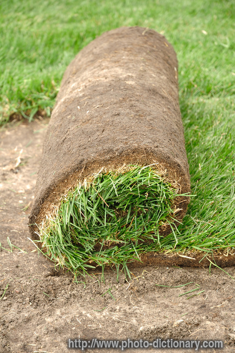 sod roll  photopicture definition at Photo Dictionary