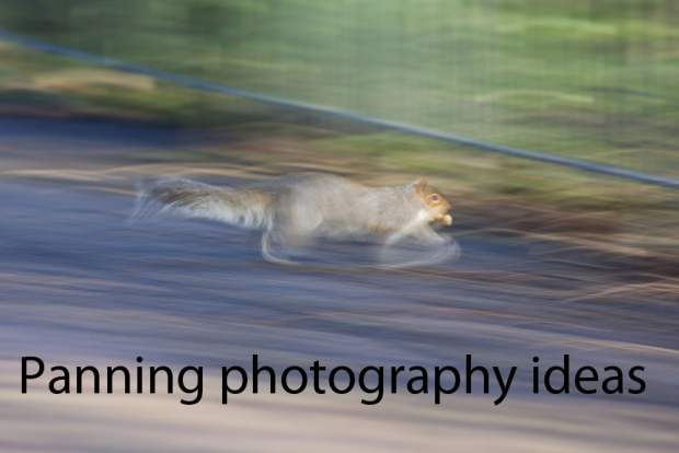 panning photography ideas running squirell