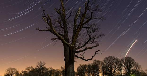 star trails at park