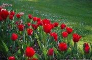 Tulipes au Parc Floral