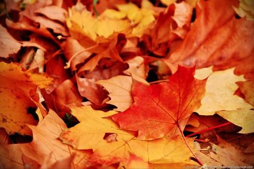 Feuilles mortes photographiées en automne.