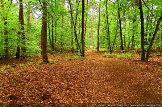Un sous-bois aux couleurs printanières photographié dans la forêt de Fontainebleau
