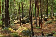 foret-fontainebleau-barbizon-06.jpg