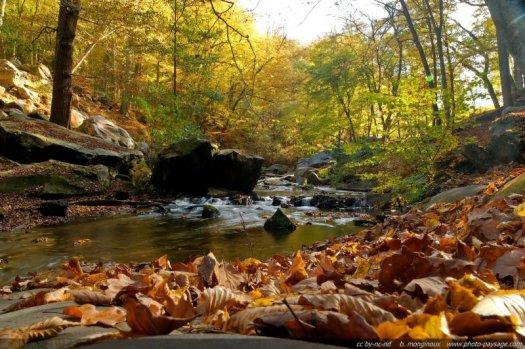 Des feuilles mortes sur les rochers au bord du ruisseau