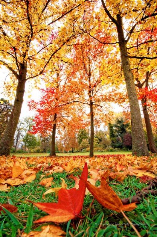 Feuilles mortes en automne dans le bois de Vincennes (Paris, France)