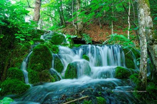 La rivière s'écoule à travers la forêt. Parc National de Plitvice, Croatie