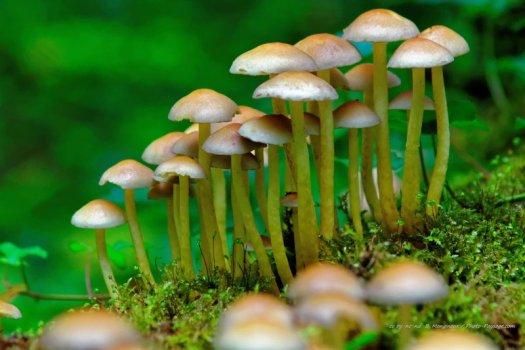 Des champignons et de la mousse sur un tronc d'arbre mort étendu dans la forêt.