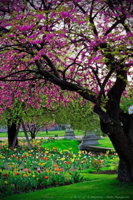 Les plus belles images de printemps à télécharger pour votre fond d'écran.