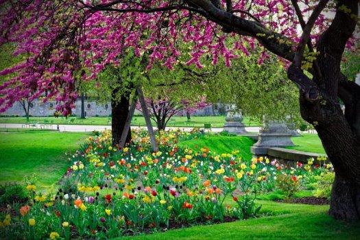 Explosion de couleurs printanières photographiées dans la jardin deTulipes multicolores et arbre de judée en fleurs photographiés dans la jardin des Tuileries, dans le centre de Paris.s Tuileries, au centre de Paris