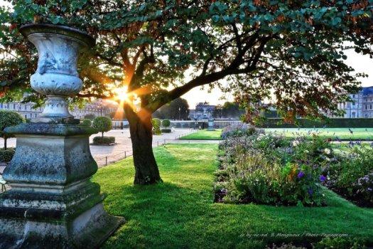 Les rayons du soleil passent à travers les branches d'un arbre près de l'allée principale du jardin des Tuileries à Paris. Cliquez sur la photo pour afficher et télécharger la version HD pour fond d'écran dans un nouvel onglet.