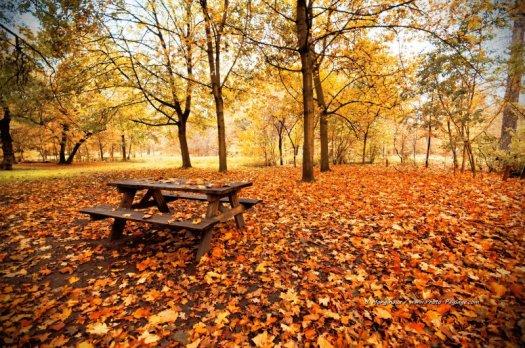 Pique nique en automne ?  Bois de Vincennes, Paris, France