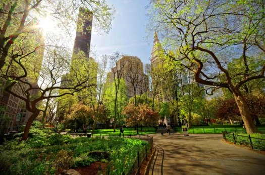 Et pour clore cette série de photos sur le printemps à New-York, un magnifique soleil printanier passant à travers les feuillages encore clairsemés des arbres du Madison Square Park.