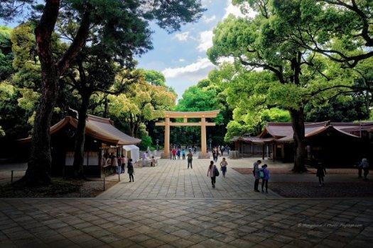 Torii vu depuis l'entrée du temple shintoïste Meiji Jingū, dans le quartier de Shibuya, à Tokyo (Japon)