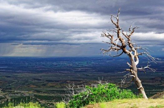 Un arbre mort au bord de la falaise Montezuma Overlook  Parc national de Mesa Verde, Colorado, USA