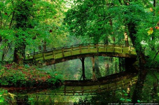 Un pont se reflète dans l'eau sous les feuillages encore verts des arbres de la forêt