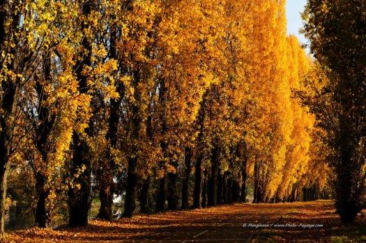 Une très belle allée de peupliers photographiée en automne sur les bords de Marne, au niveau de la commune de Noisy-le-Grand (magnifique alignement de peupliers qui n'est plus qu'un souvenir, car elle a été rasée cette année à la suite d'importants travaux sur les berges de la Marne). Cliquez sur la photo pour afficher le fond d'écran HD dans un nouvel onglet.
