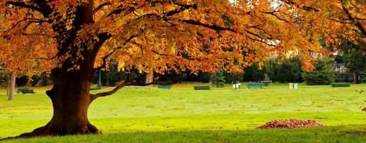 Les plus belles photos d'automne