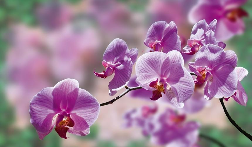 Φωτογραφίζοντας λουλούδια.