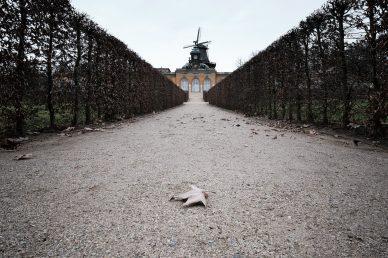 Photoauge / Das Blatt
