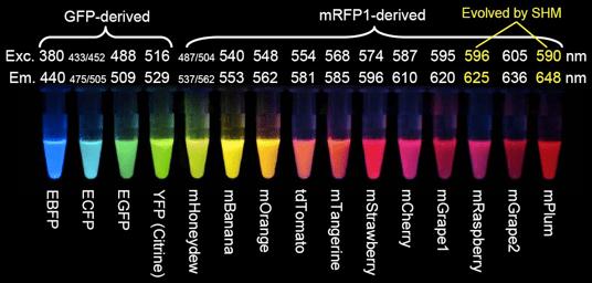 Fluorescent Proteins palette