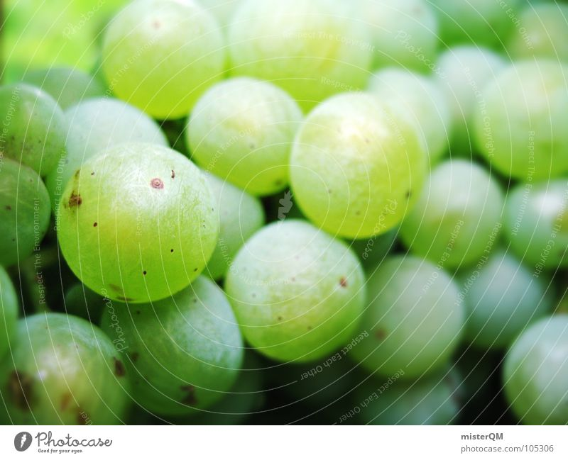 Green Line Field Fruit  a Royalty Free Stock Photo from