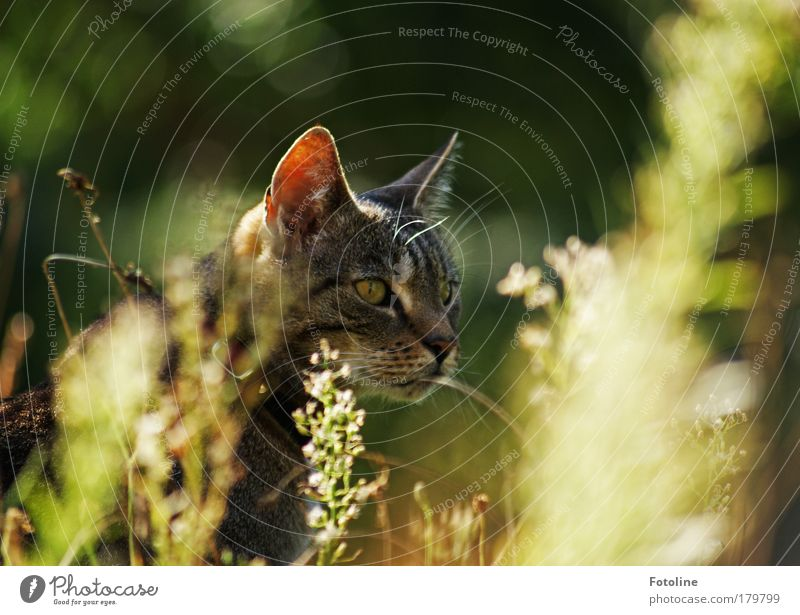 Two Cats Cat Nature Plant A Royalty Free Stock Photo