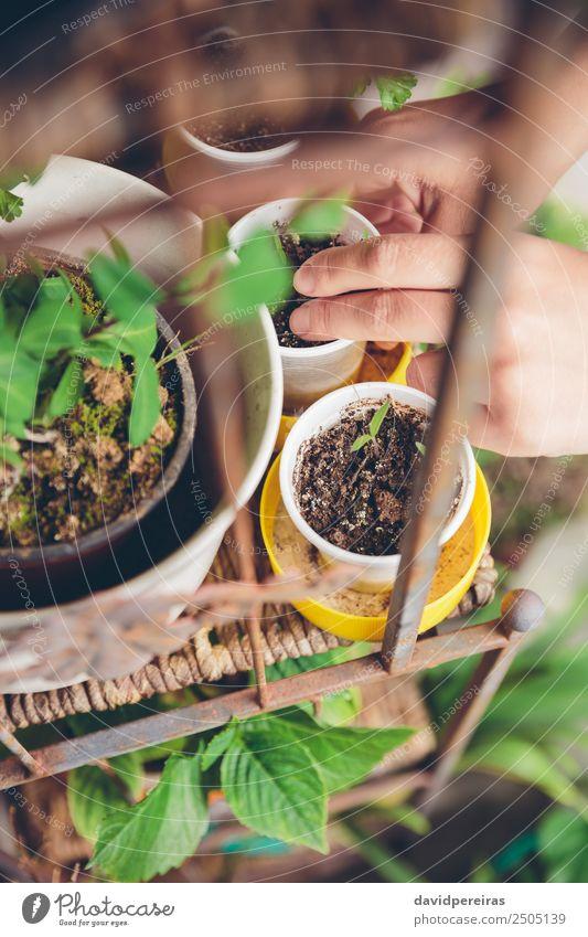 woman hands planting seedlings