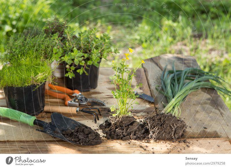 seedlings plants in pots