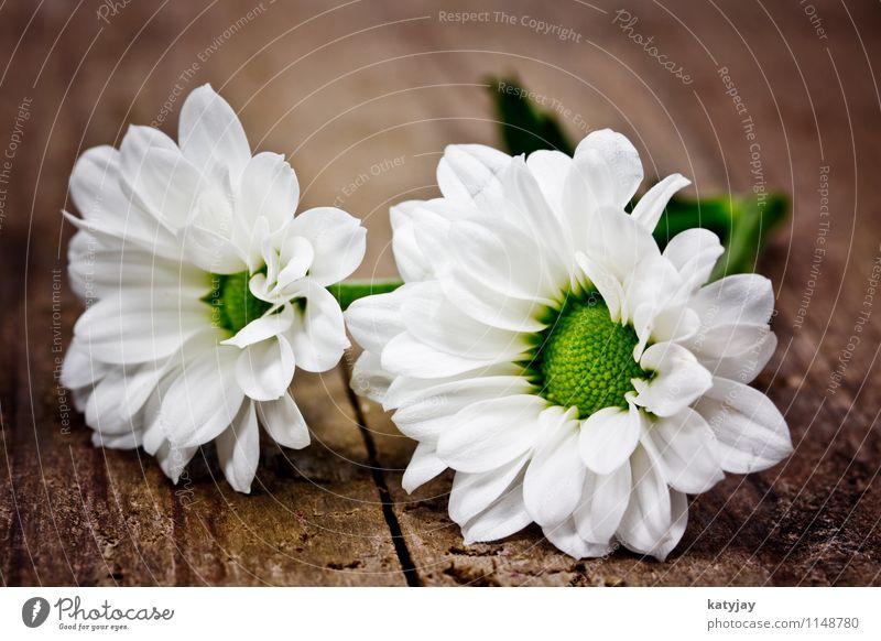 Hochzeitsblumen Weiss