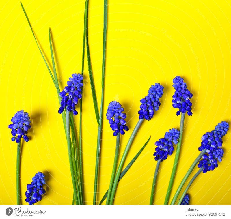 Blaue Blumen Kaufen garten blumen blau novalis blaue blumen blumen in nanopics blaue