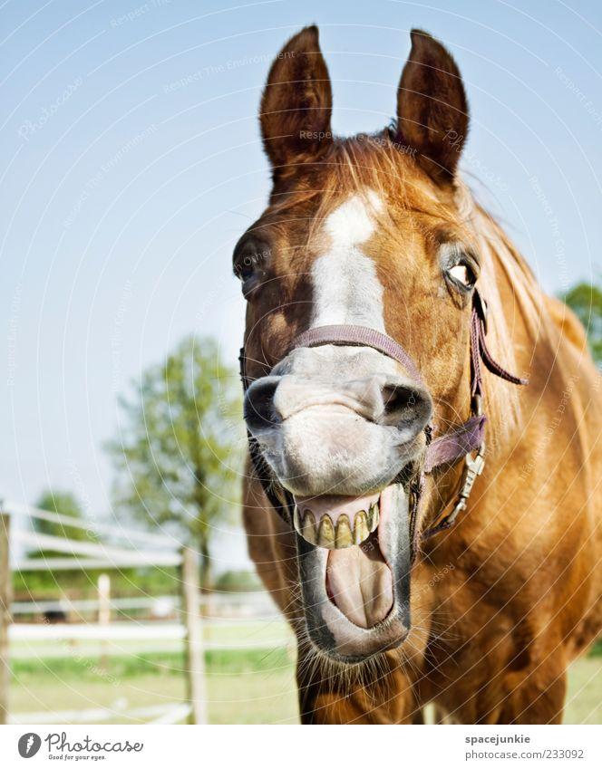Happy Horse Lachen Lustig Ein Lizenzfreies Stock Foto