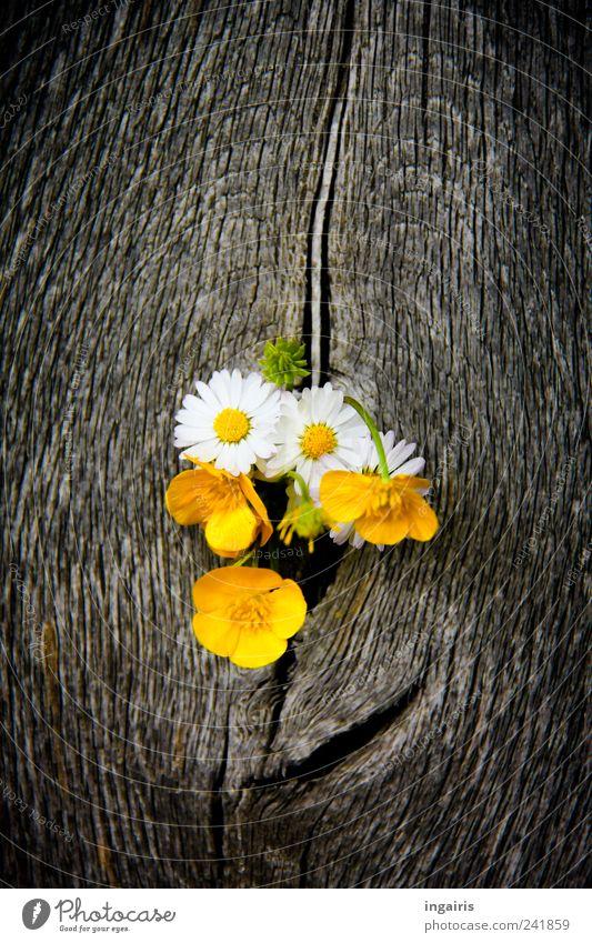 Rain Fall On Flowers Wallpaper Wiesenblumen Natur Pflanze Ein Lizenzfreies Stock Foto