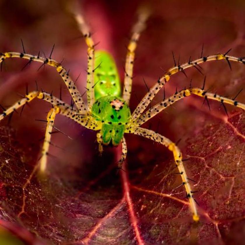 Een zeer groene spin door Gary R. Hook